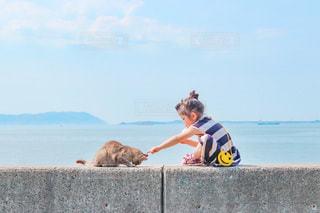 野良猫とのおやつタイムの写真・画像素材[3313178]