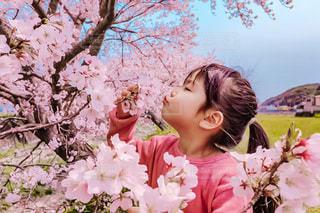 綺麗に咲いてくれたご褒美の写真・画像素材[3316446]
