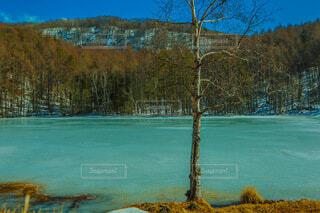 木々に囲まれた水の体の写真・画像素材[4196575]
