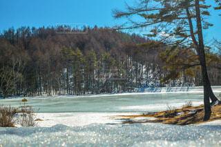 水の体の隣にある木の写真・画像素材[4196576]