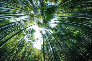 竹林の写真・画像素材[4336574]