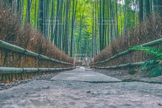 竹道の写真・画像素材[4336571]
