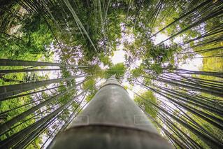 竹の成長の写真・画像素材[4336572]
