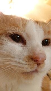 何かを見つめる猫の写真・画像素材[3316759]