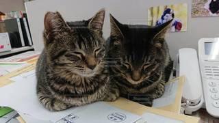 仔猫のお気に入りはココの写真・画像素材[3320105]