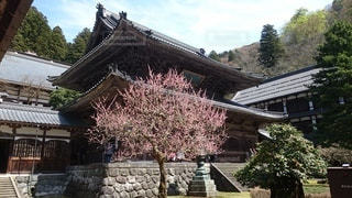 永平寺の写真・画像素材[3358739]