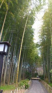 竹林の小路の写真・画像素材[3358738]