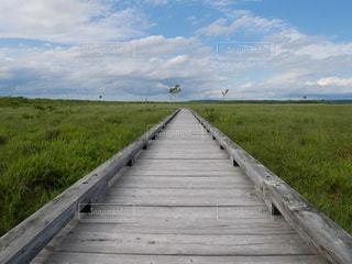 背景に木々のある大きな緑のフィールドの写真・画像素材[3327656]