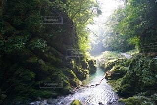 高千穂峡近くの渓谷の写真・画像素材[4690229]