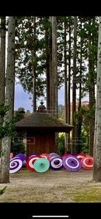 神社の中の傘の写真・画像素材[3703724]