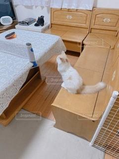 卓球を見守る猫の写真・画像素材[3388896]