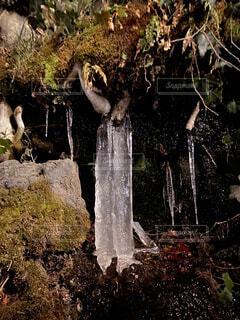 自然,鳥,朝日,水面,アート,氷,滝,樹木,噴水,正月,お正月,日の出,神秘,新年,初日の出,氷柱,マイナスの世界