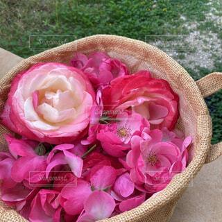 花柄つみの写真・画像素材[4535764]