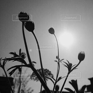 逆光の写真・画像素材[4554622]