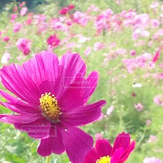 花のクローズアップの写真・画像素材[4561596]