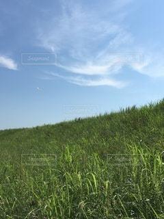 夏空①の写真・画像素材[3344997]