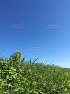 夏空④の写真・画像素材[3350574]