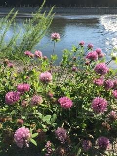 夏の川辺①の写真・画像素材[3350580]