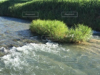 夏の川①の写真・画像素材[3351011]