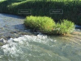 夏の川①の写真・画像素材[3351020]