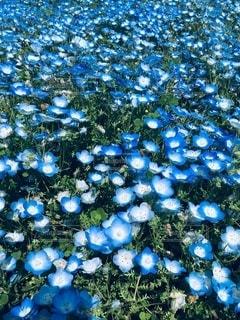 青の世界の写真・画像素材[3399843]