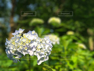 花の写真・画像素材[560378]