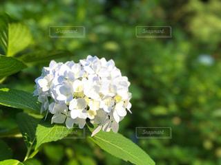 花の写真・画像素材[560380]