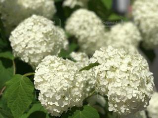 花の写真・画像素材[560383]