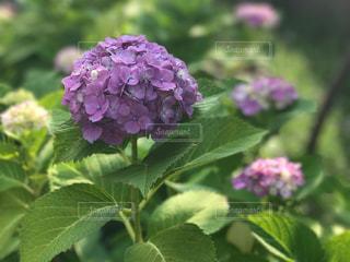 花の写真・画像素材[560386]
