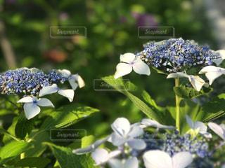花の写真・画像素材[560388]