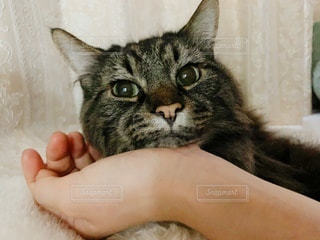 私の手を枕に!一緒に過ごす時間♡の写真・画像素材[3382309]