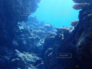 海の底からの写真・画像素材[3338114]