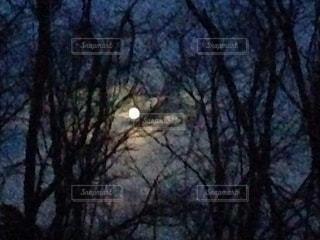 木立から見える満月の写真・画像素材[3363975]