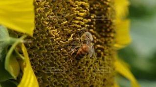 花のクローズアップの写真・画像素材[3499162]