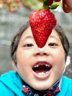苺狩りの写真・画像素材[4546477]