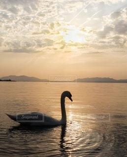白鳥の湖の写真・画像素材[3367960]