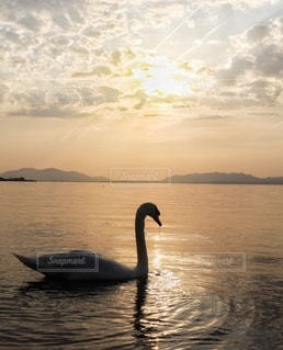 白鳥の湖の写真・画像素材[3394807]