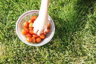 食べ物,トマト,野菜