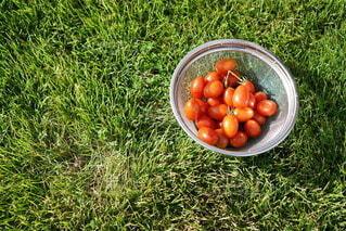 トマト,野菜,食材