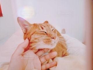 寝るときは一緒の写真・画像素材[3361717]