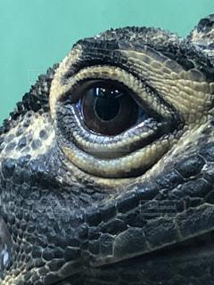 爬虫類のクローズアップの写真・画像素材[3355668]