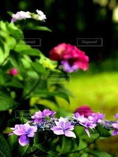 花のクローズアップの写真・画像素材[3356786]