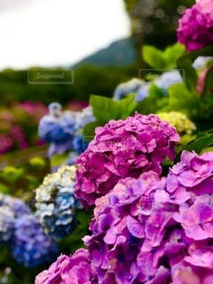 花のクローズアップの写真・画像素材[3375784]