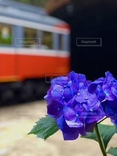 花のクローズアップの写真・画像素材[3375788]