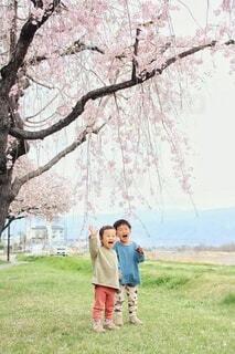 春の中でさけぶ!の写真・画像素材[4312809]