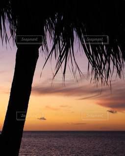 ヤシの木越しの夕暮れの写真・画像素材[3398913]