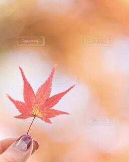 秋色を手にの写真・画像素材[3660630]