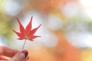 ちいさな秋見つけたの写真・画像素材[3671358]