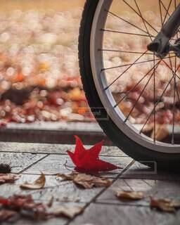紅葉サイクリングの写真・画像素材[3713933]