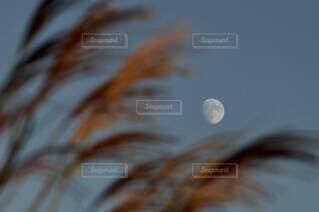 月とススキの写真・画像素材[3720292]